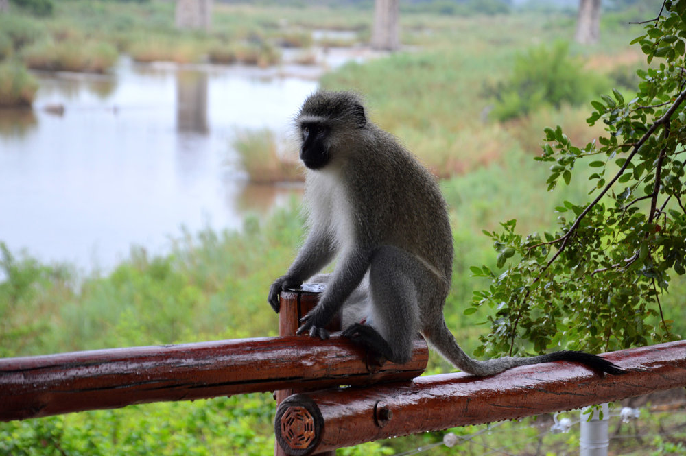 A monkey at the tourist center