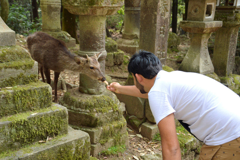 A deer in Nara