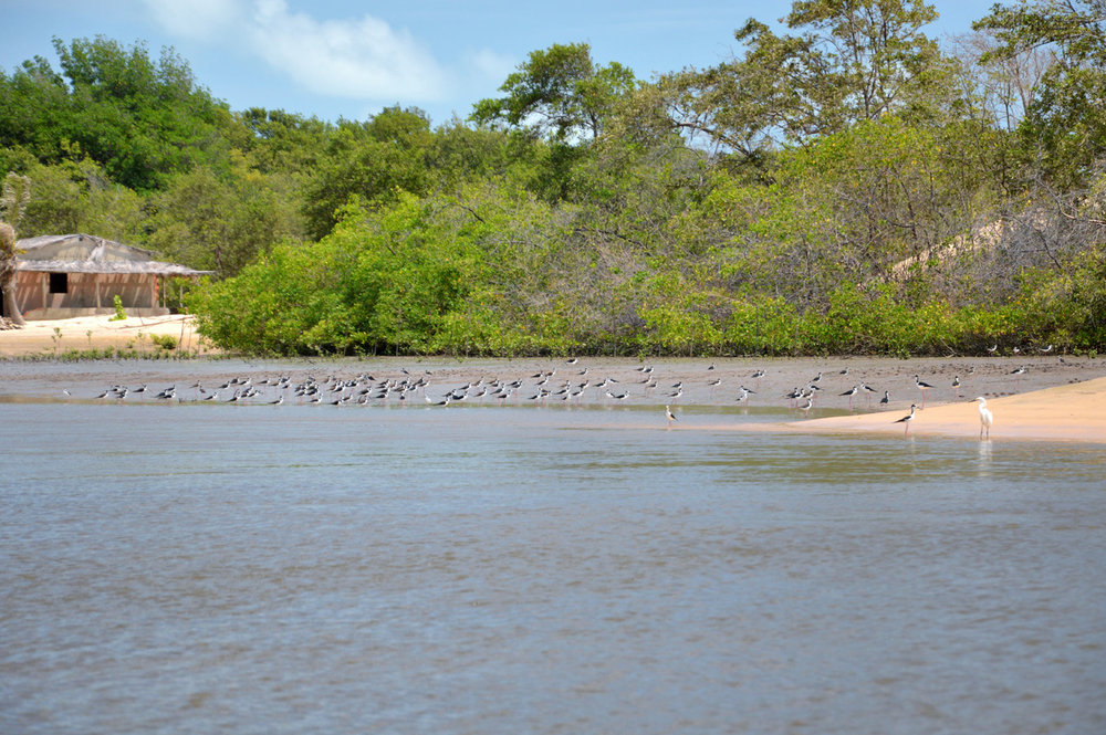 Preguicas river