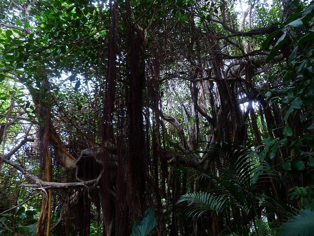 jungle-406783_640.jpg