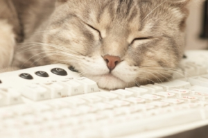 Settle in with a nice cat, a glass of wine and a long read of questions whose answers you have probably already heard.