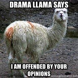 Drama Llama.jpg