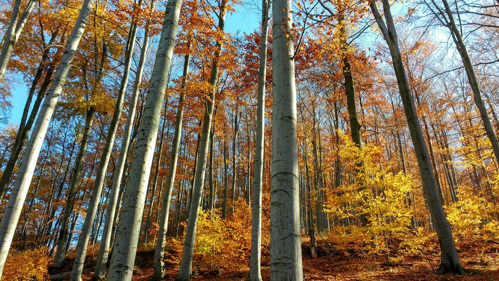 Bükk National Park - intensely Autumn!