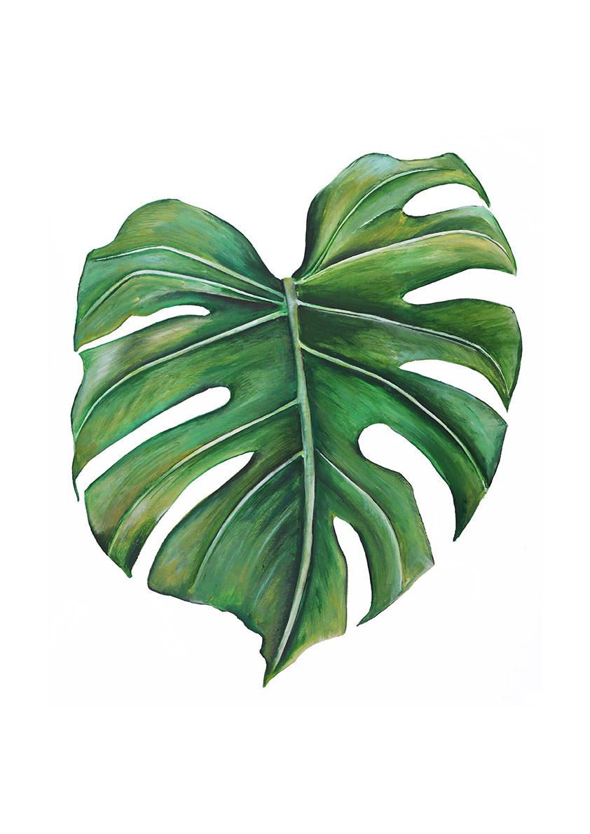 Dollybirds Art Monstera Deliciosa Print