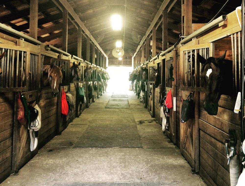 Horses in the barn at feeding time