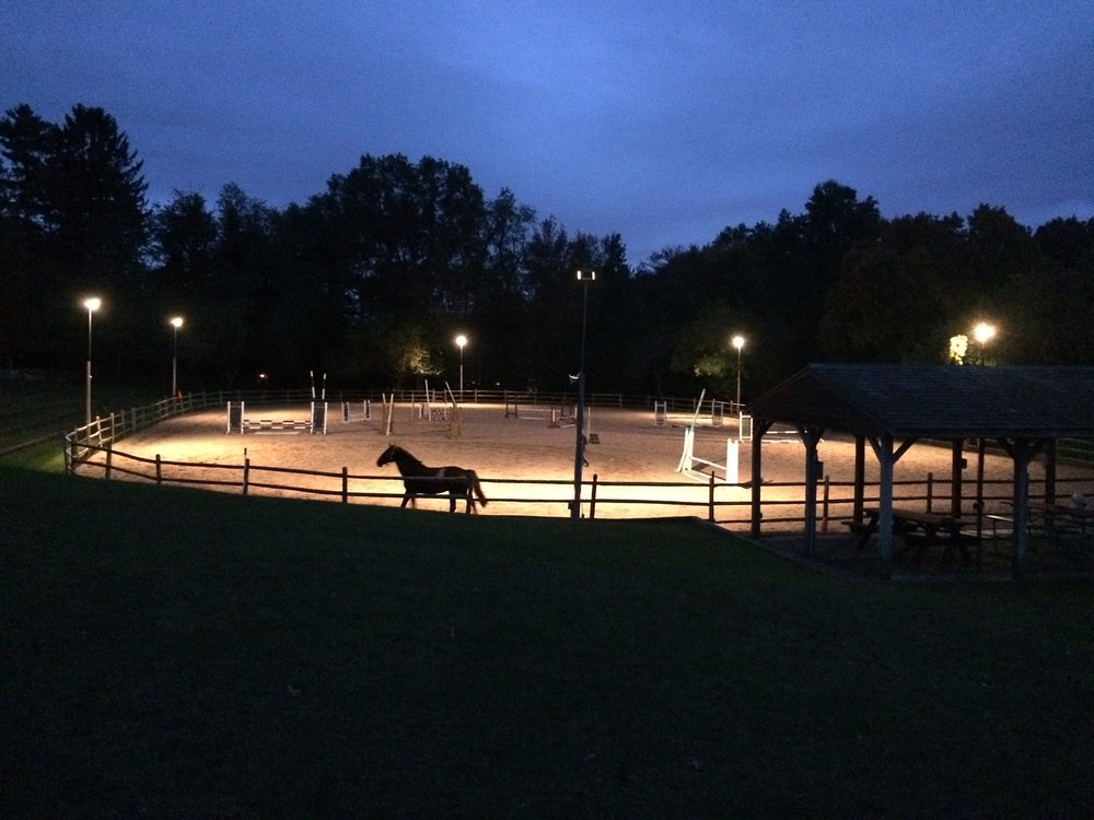 Horse runs in a lighted riding ring