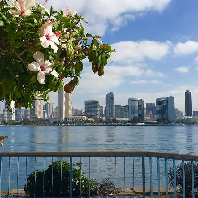 A very nice way to start the morning. #coffeefirst #morningwalk #sandiegoskyline