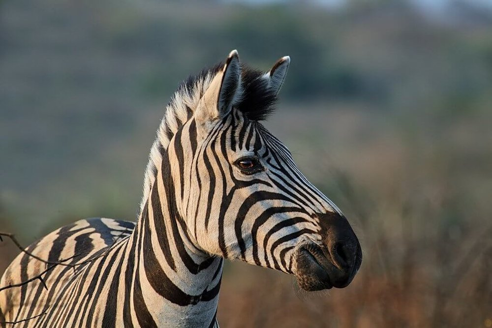 rare-disease-day-blog-zebra.jpg