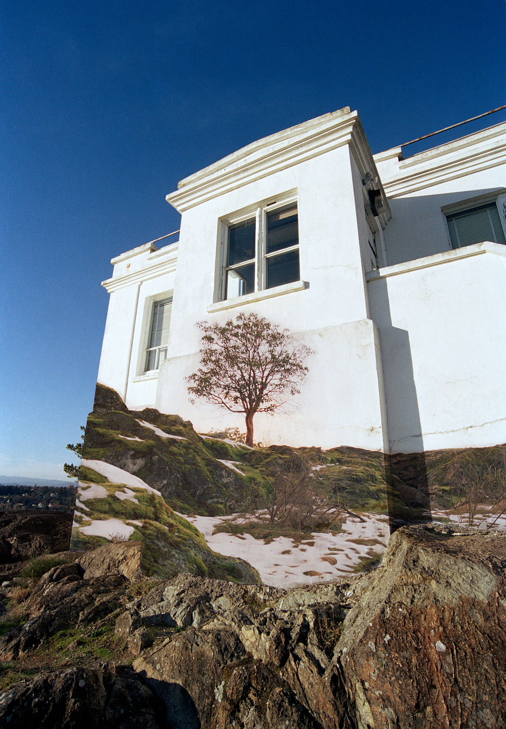 wallhousetree copy.jpg
