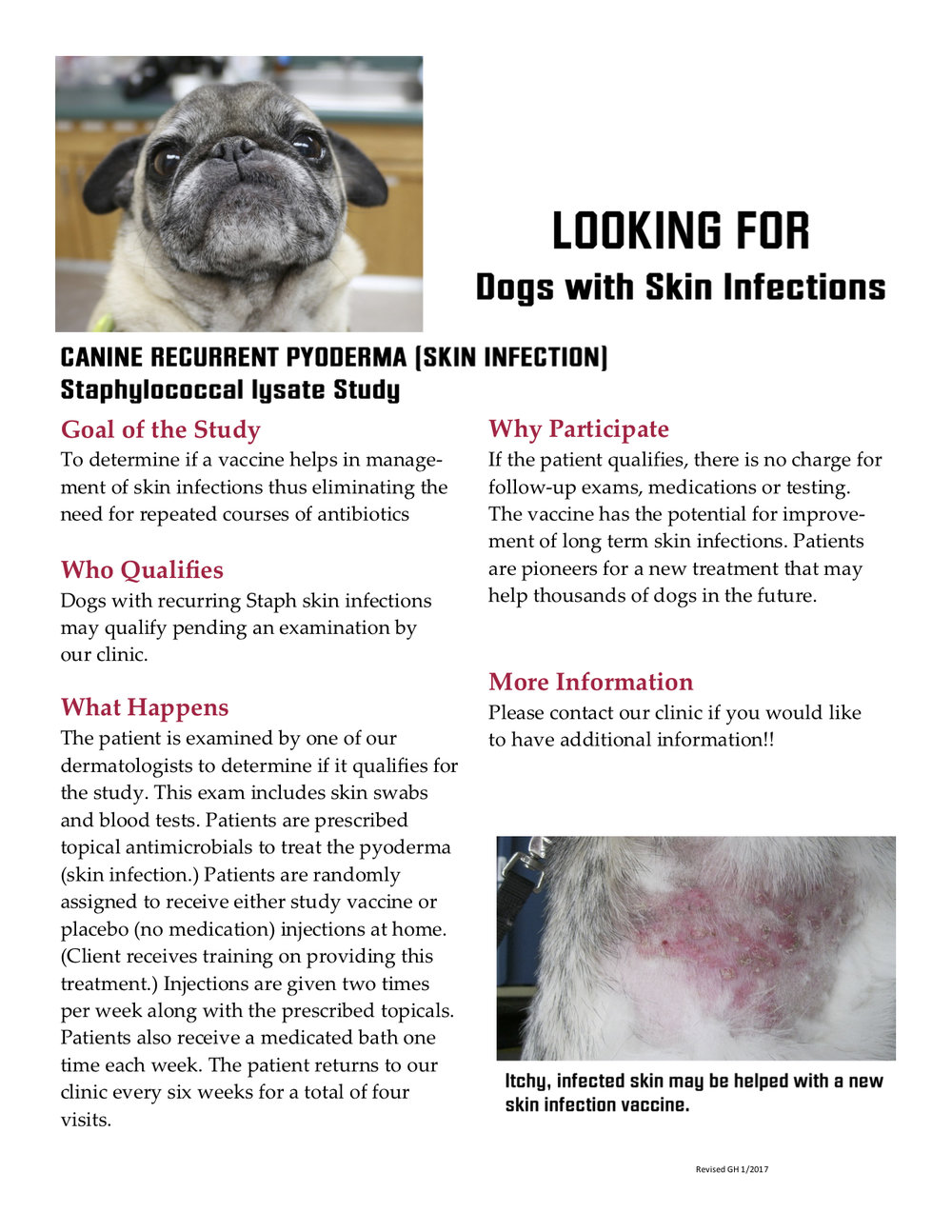Staphylococcal Lysate study flyer image.jpg