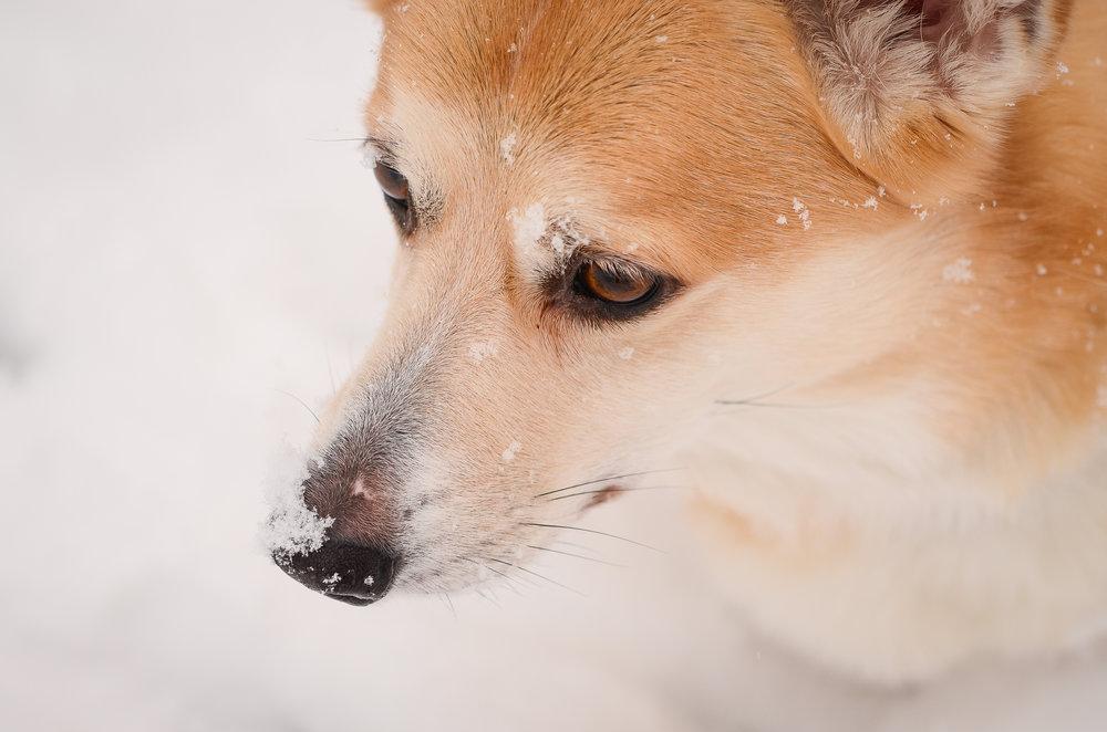 Snow-040.jpg