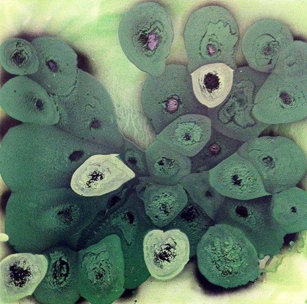 Green Cells