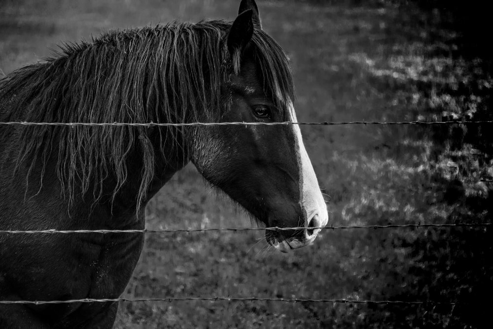 Horse and Fence, Richmond, Utah ©Robert Brian Welkie 2017