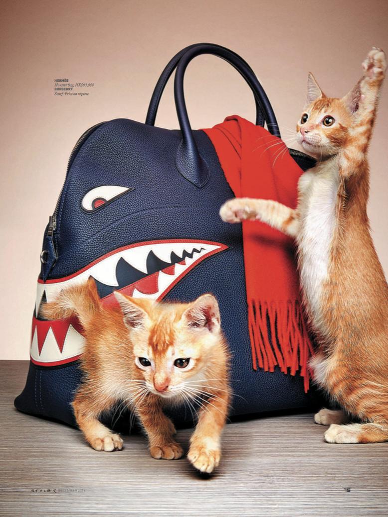 news_JC de Marcos_SCMP Kittens_ 3.png