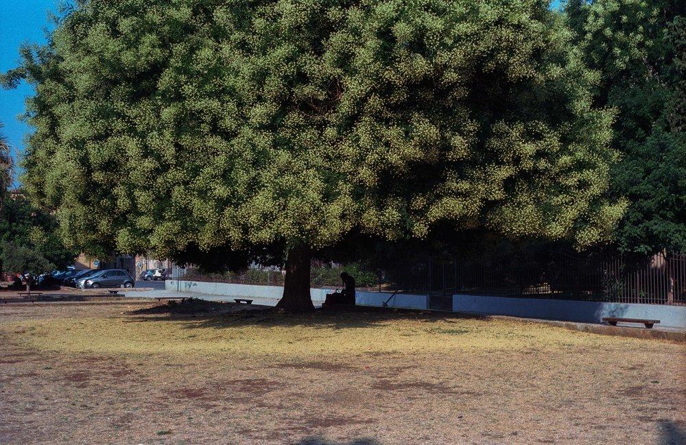 Palermo_72dpi-3.jpg