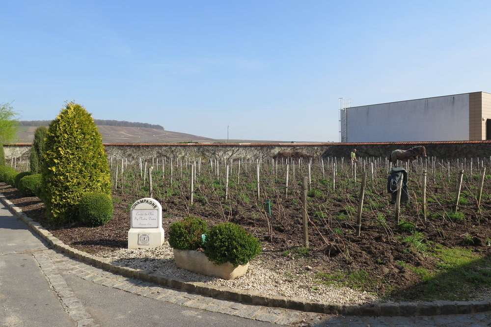 Clos Faubourg Notre-Dame, Vertus Premier Cru, belonging solely to the Fourny family