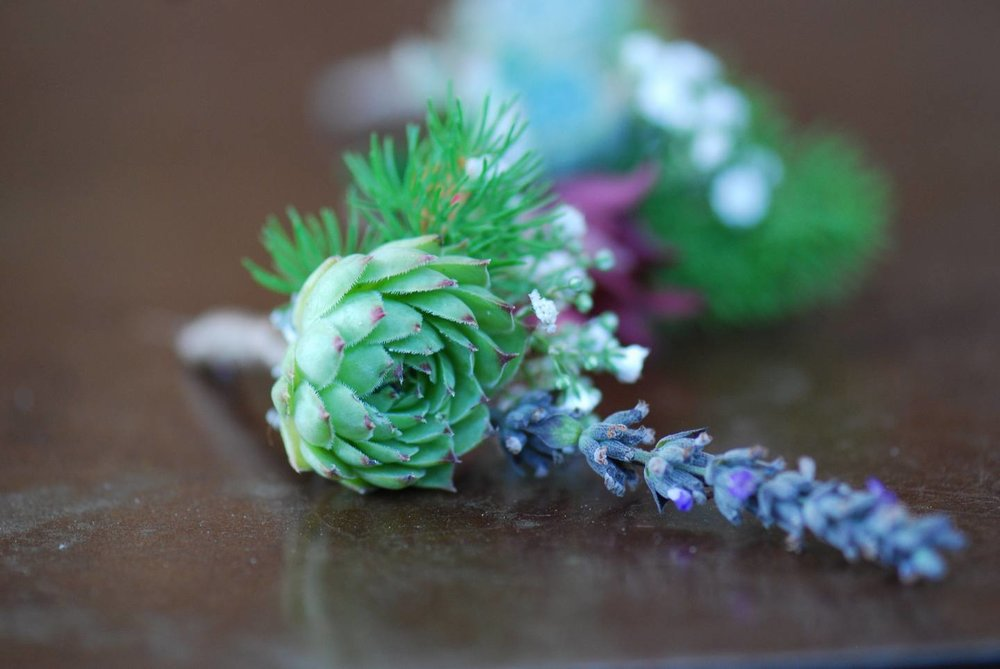 Succulent Boutonniere 2 Living Room Design