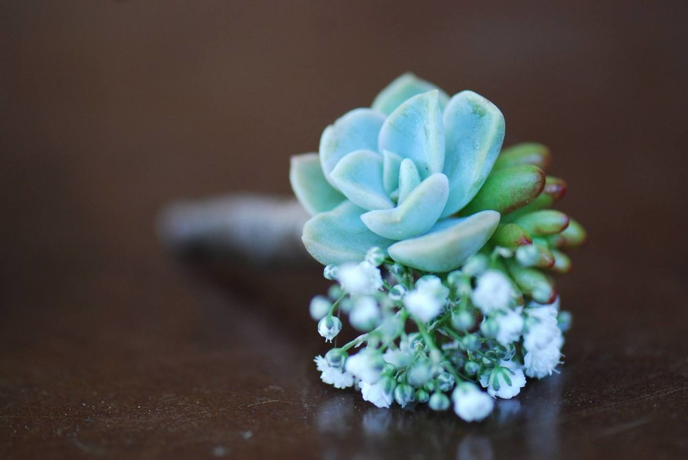 Succulent Boutonniere Living Room Design