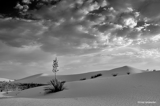 YUCCA AND CLOUDS, WHITE SANDS NATIONAL MONUMENT, ALAMOGORDO, NEW MEXICO 2011