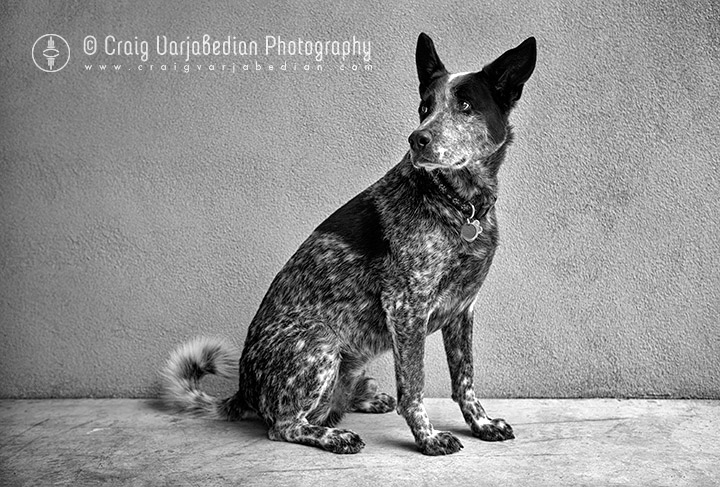 My Best Friend Dektol, Summer, Santa Fe, New Mexico 2013 Photograph by ©Craig Varjabedian