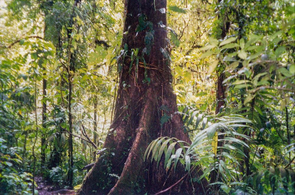 Costa Rica 1999 (8 of 9).jpg