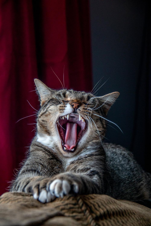 Pablito Yawns-1.jpg