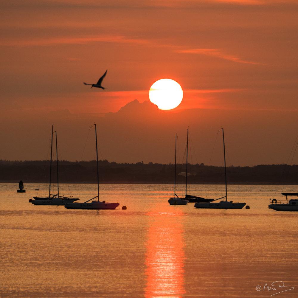Tern sunset.