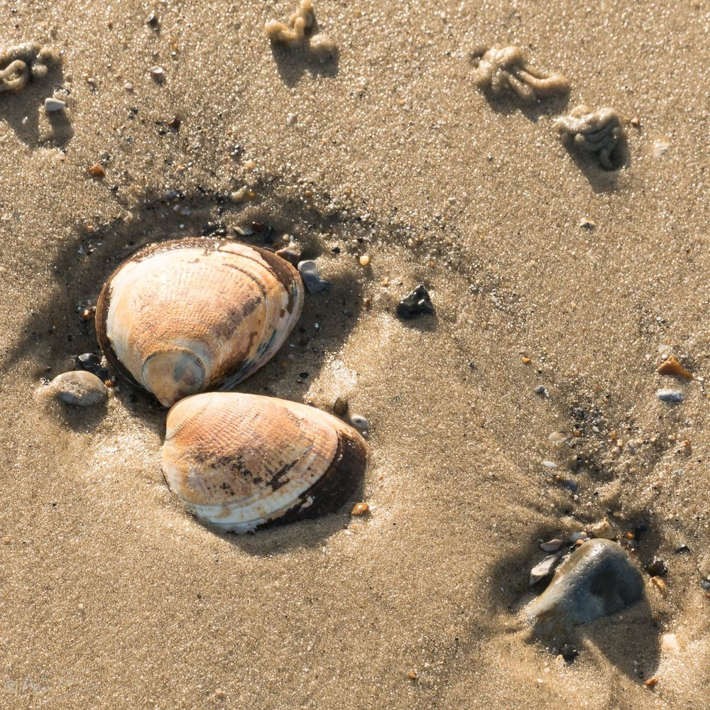 Sand shells