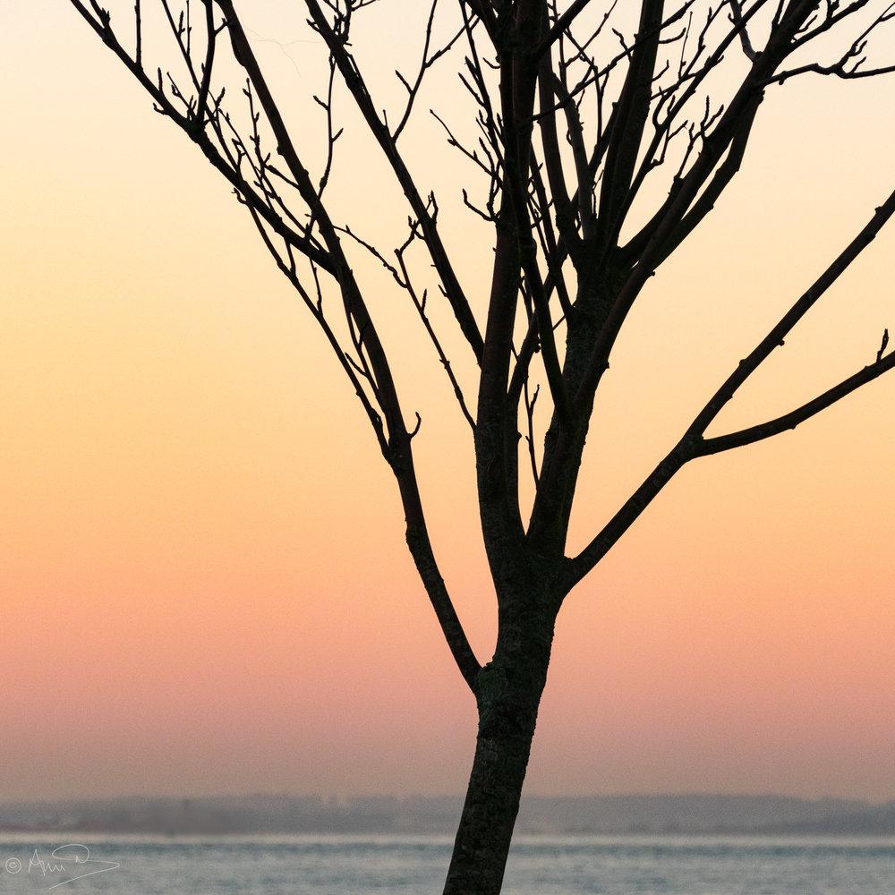 Dusk with tree