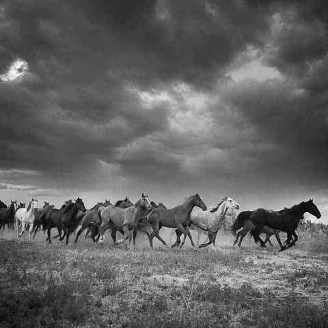 Adam Jahiel Horses.jpg