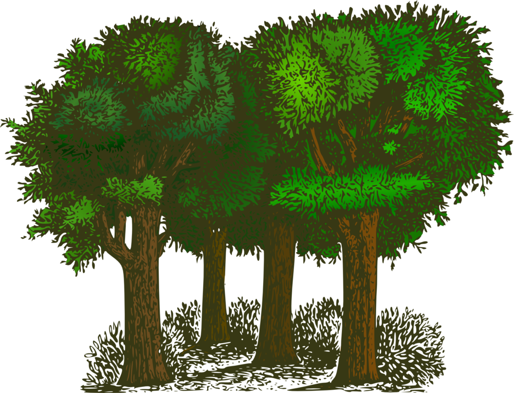forest-148727.png