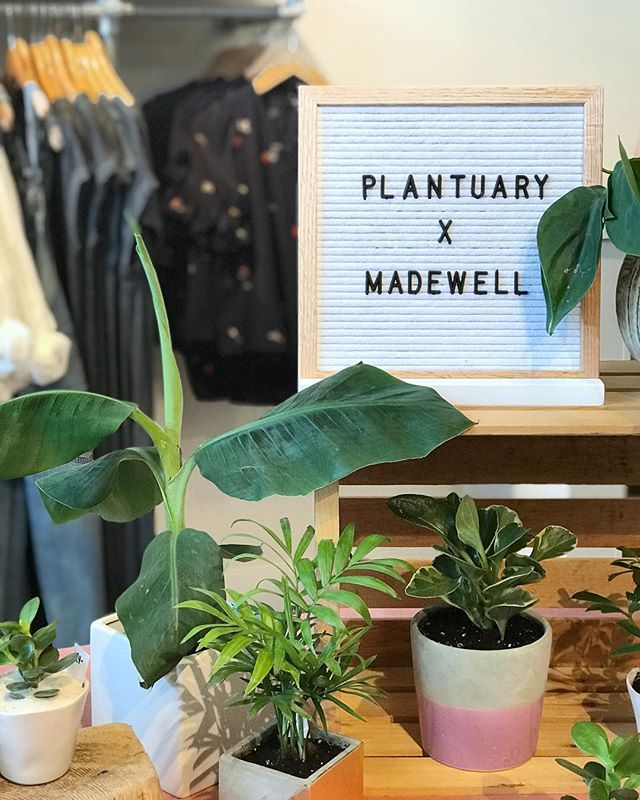Seattle! We're spending the afternoon at the University Village @madewell with plenty of greenery for you. Come say hi and take home a new plant pal, we'll be here 'till 2!