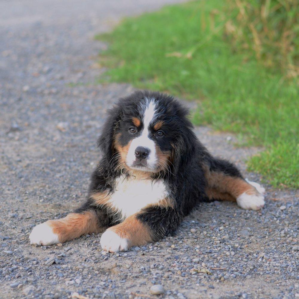 Puppy Bruno.JPG