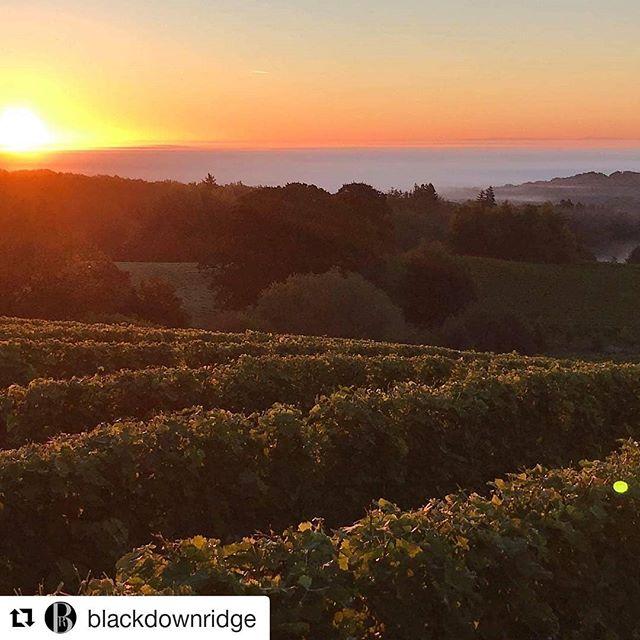 @blackdownridge amazing harvest images! What scenic loveliness #englishwine #vineyard #winenews  #Repost @blackdownridge (@get_repost) ・・・ 'It's the most wonderful time of the year'. #harvest #englishvineyard #grapes #autumn @blackdownridge