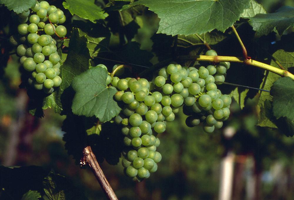 Photo Credit: Austrian Wine
