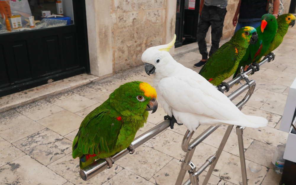 Here's a picture of some parrots I met in Dubrovnik to break up this post.
