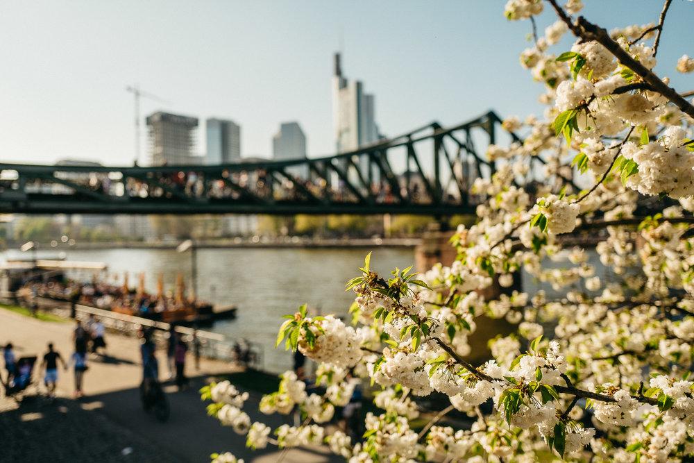 Frankfurt Skyline Main spring flowers trees bridge