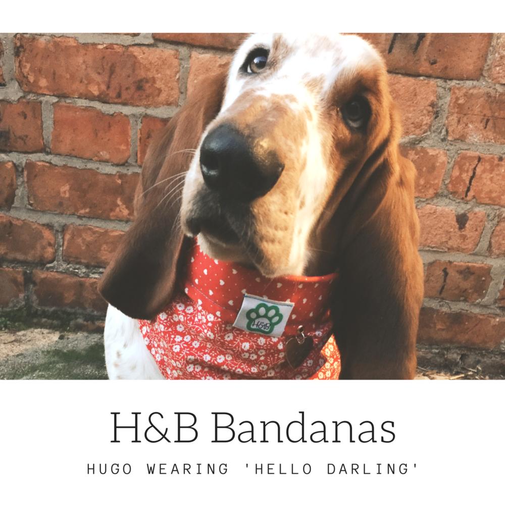 Hello Darling - Hugo.png