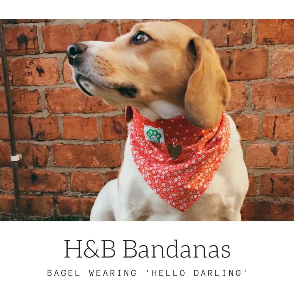 Hello Darling - Bagel 2.png