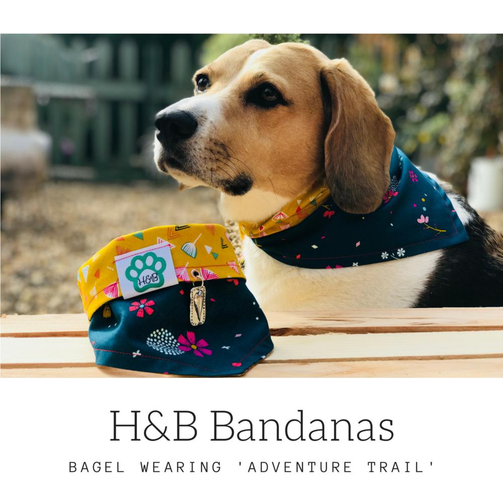 Bagel - adventure trail.png