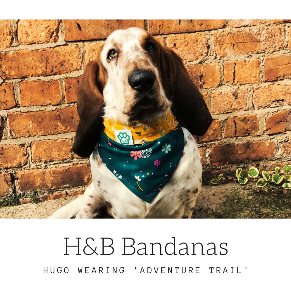Hugo - adventure trail.png