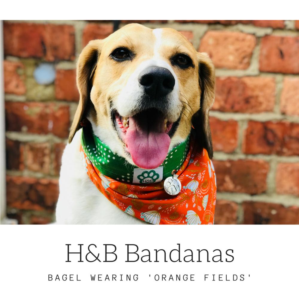 bagel - orange fields.png