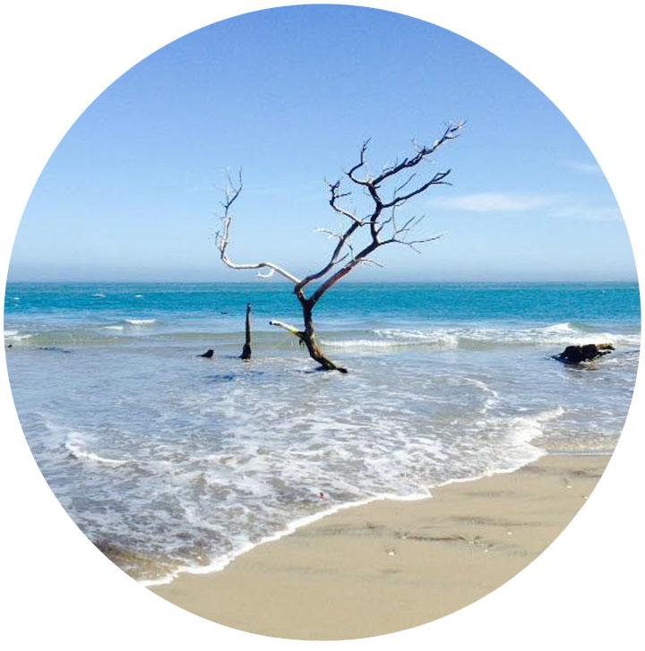 beach_branch.jpg