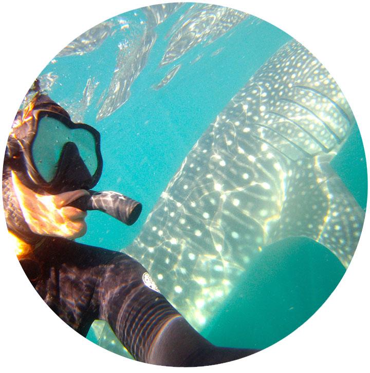 whale_shark_4.jpg