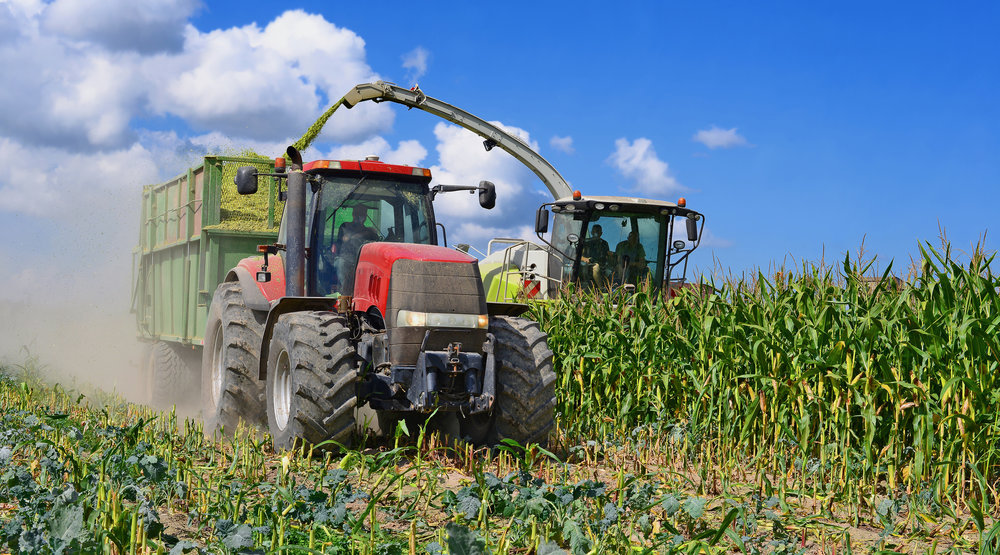 Growing maize for silage?