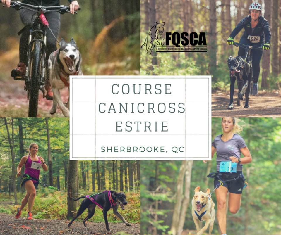 Calendrier Canicross.Calendrier Federation Quebecoise Des Sports Canins Atteles