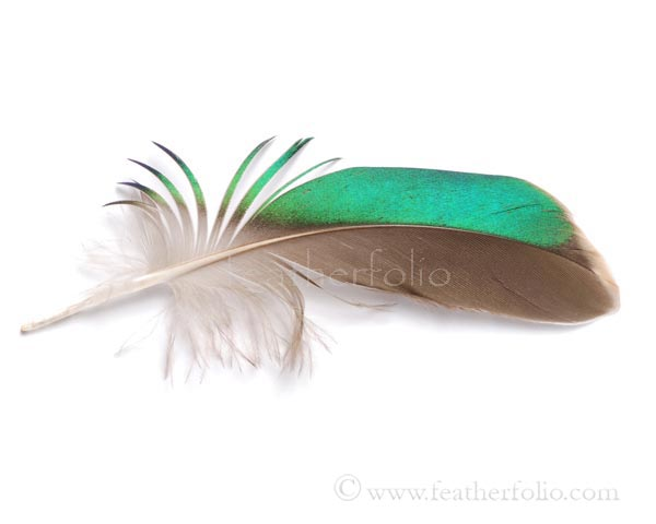 green-wing-teal-feather-wing3.jpg