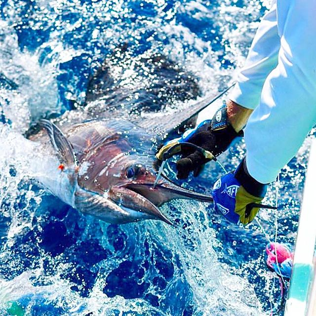 Great action shot from @wesleyhunterphoto of Team Eye Catcher on their 61' Garlington. #garlingtonyachts #sportfishing #61 #teameyecatcher #sailfish #fightofyourlife #release #repost @eye_catcher_sportfishing