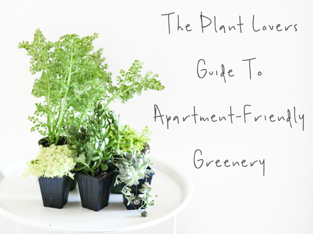 The Plant Lovers Guide To Apartment-Friendly Greenery | A Girl, Obsessed