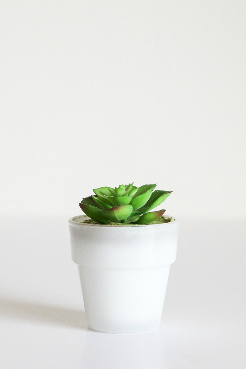 The Plants Lovers Guide To Apartment-Friendly Greenery | A Girl, Obsessed